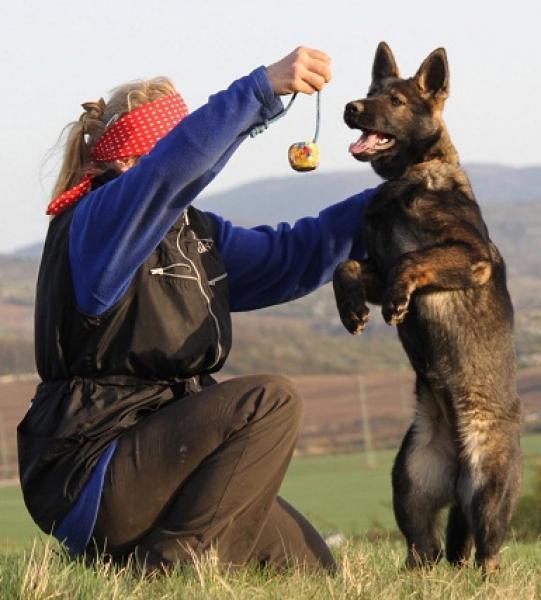 Hlídání,výcvik psů
